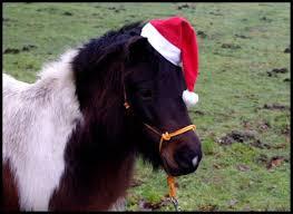 poney noel